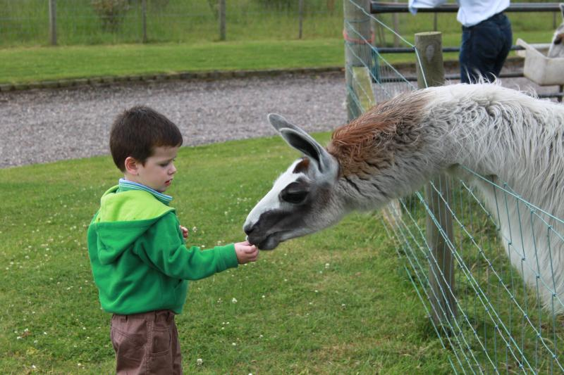 Feeding the Llamas
