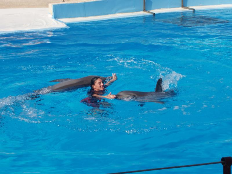 Swimming with the dolphins at aquamarine