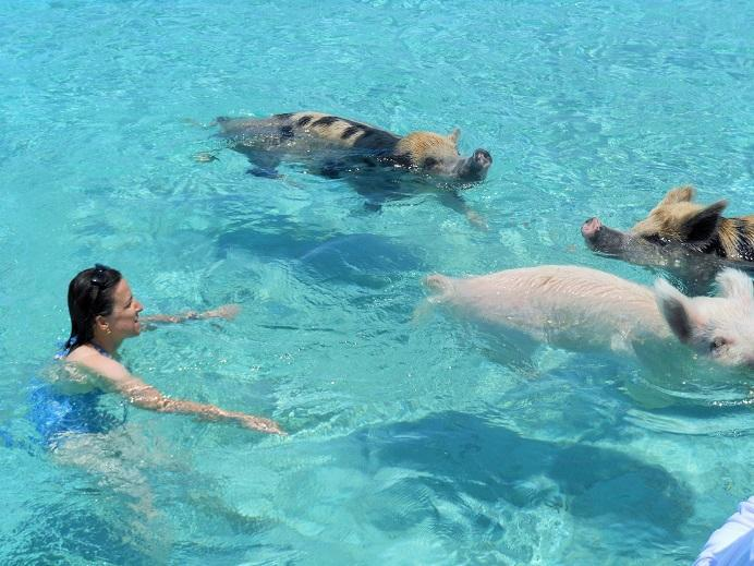 Let us arrange a trip for you to meet the swimming pig