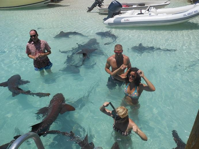 Let us arrange a trip for you to swim with the nurse sharks.