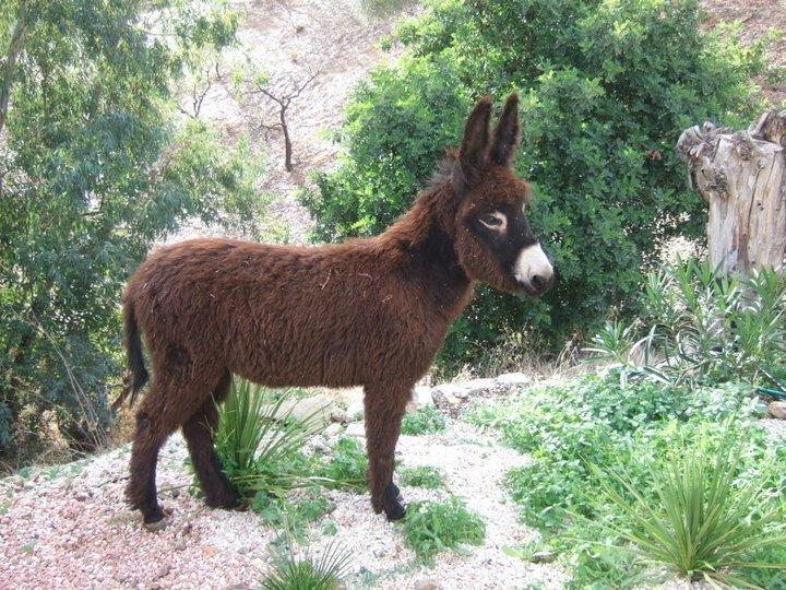 Carlos, one of the B&B's donkeys