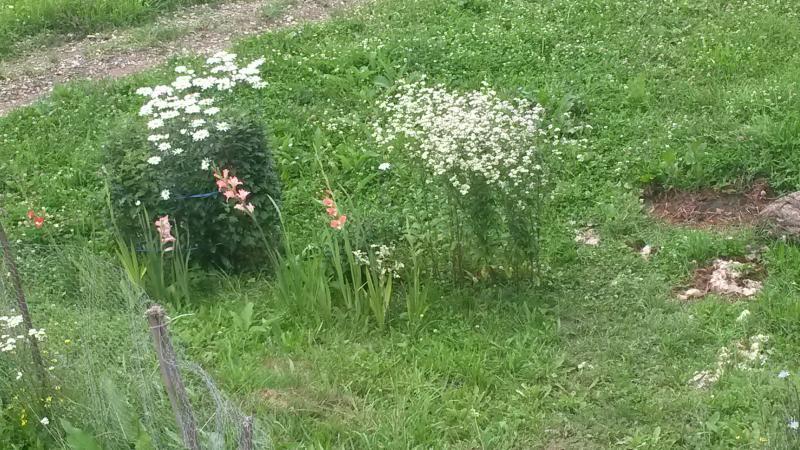 nossas primeiras flores