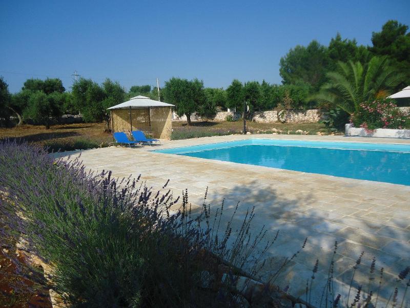 Prive zwembad ondergedompeld in de lavendel