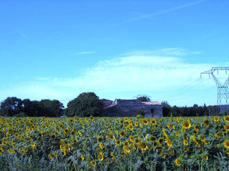 House from road with sunflower field in front
