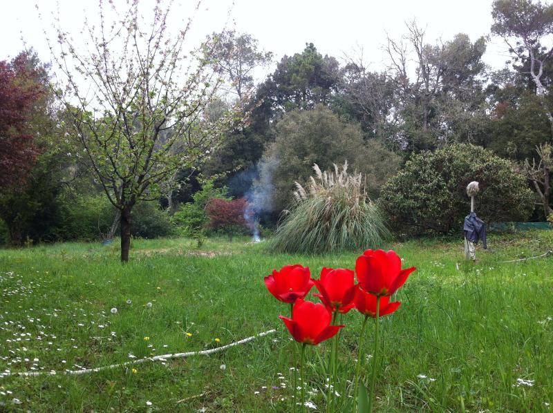South west corner of garden - spring has sprung!