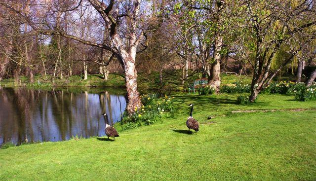 The stunning garden with wild life and natural lake fed by 4 natural springs
