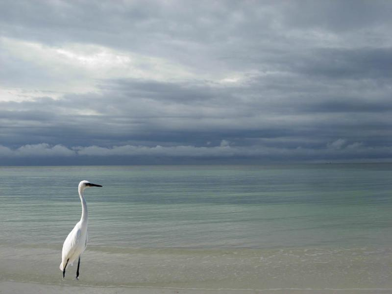 A great egret on the Beach