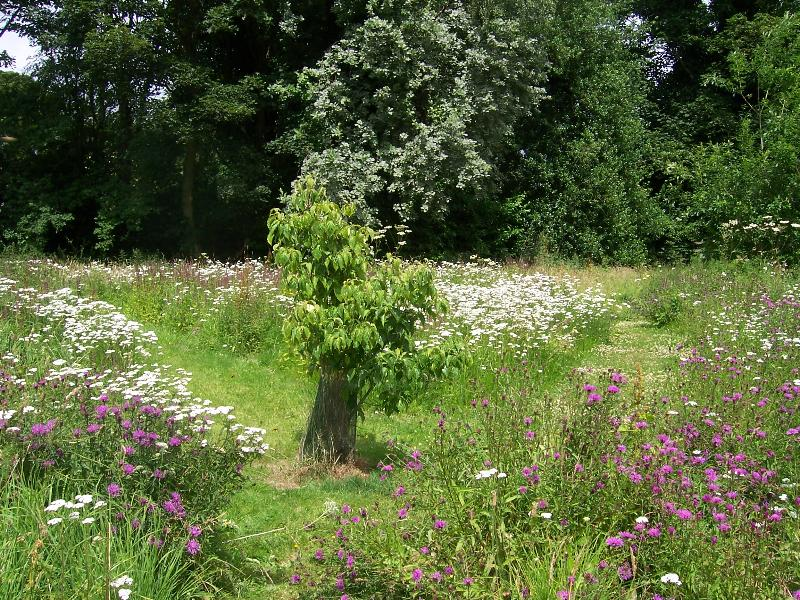 The wildflower meadow with a maze of paths mown in - a favourite with the children