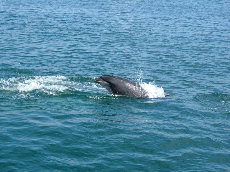 A dolphin in the bay