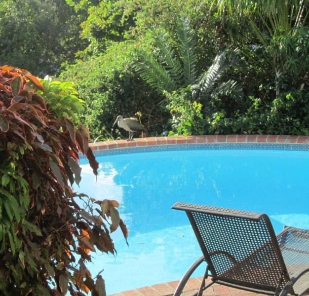 Swimming pool with birdlife