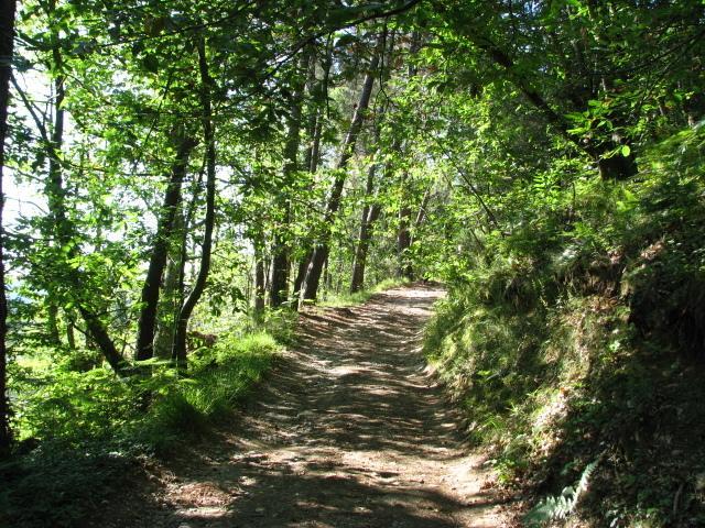 Surrounding area - wood