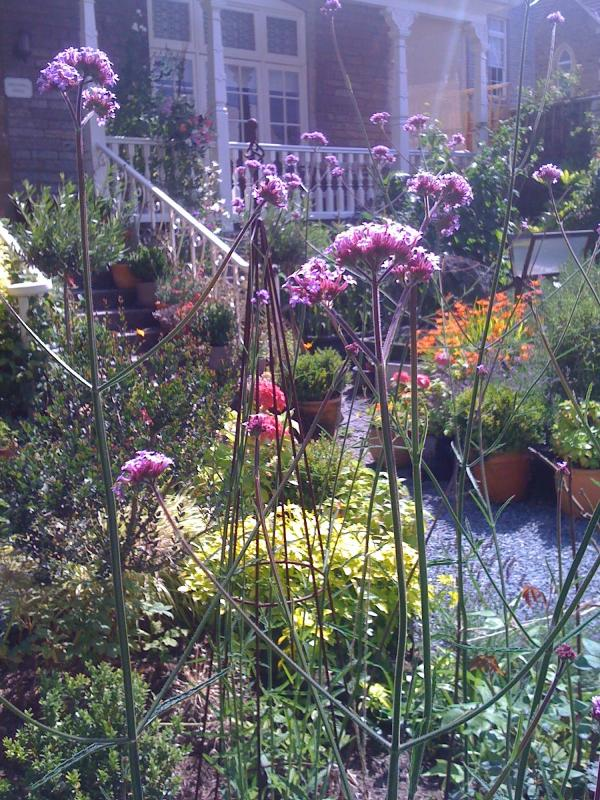 our flowers and shrubs attract bees & butterflies