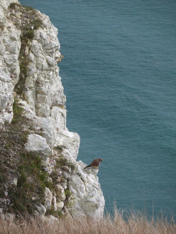 Dorset Wildlife