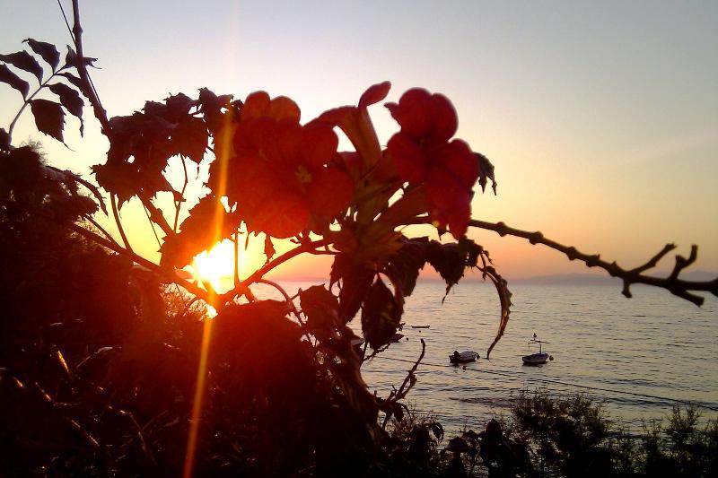 Flores en la puesta de sol en uno de los balcones