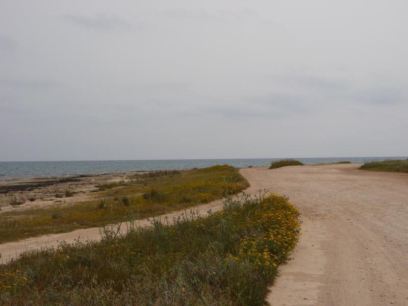 Long beach walks at nearby coastal area