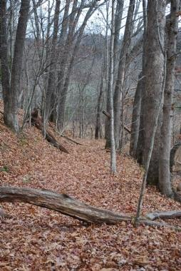 One of the State Park Trails