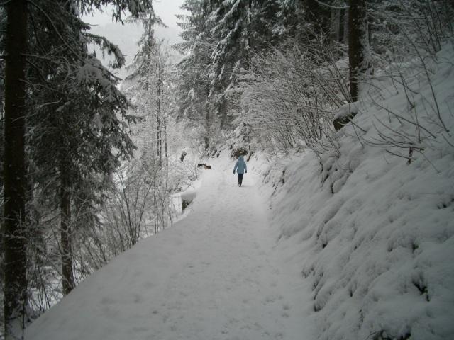 WinterWalks