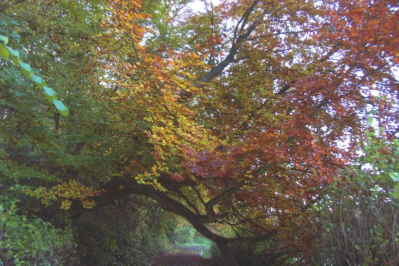Stunning in autumn, walks by the river Coquet in Warkworth