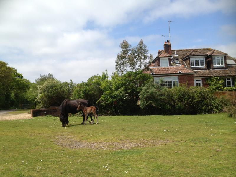 Forest Corner view with New Forest Ponies