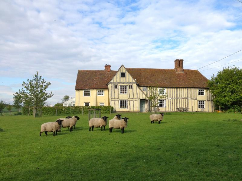 Butlers Hall Dairy with flock of Suffolk sheep set in beautiful countryside