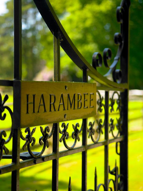 Welcome to Harambee