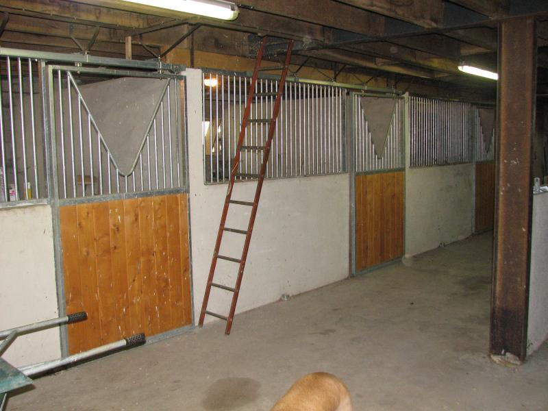 Bring your Horse as well, he/she can stay in our super Modern Stables