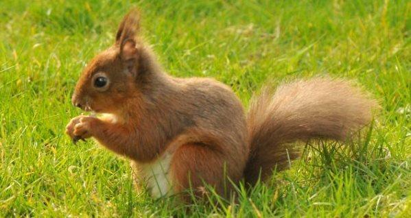 Red Squirrels are in abundence and can be seen from the cottage window
