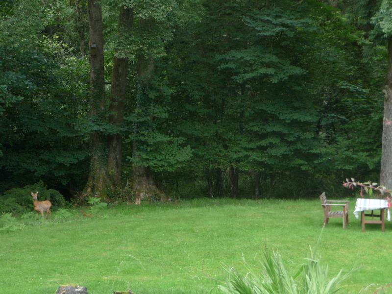 Reh im Garten.