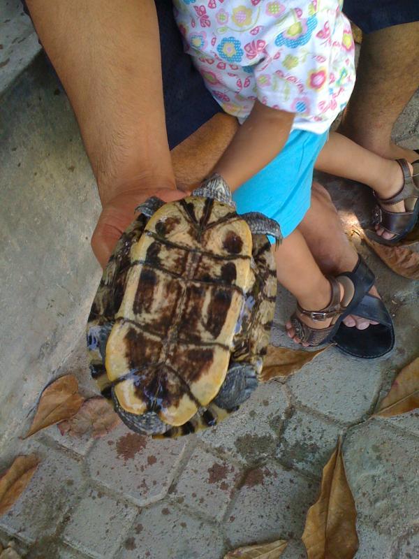 En av våra kunder med en sköldpadda