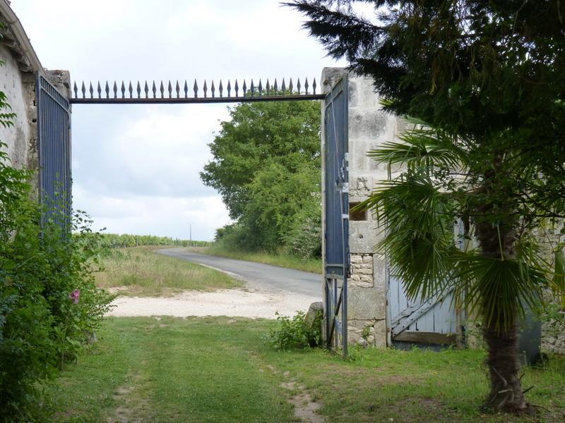 View towards the vineyard