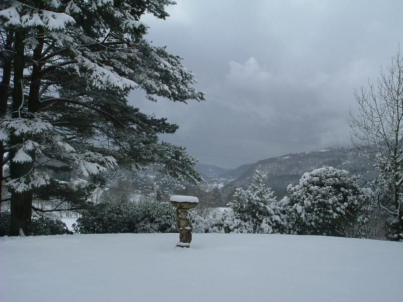 Snöiga Visa från trädgård