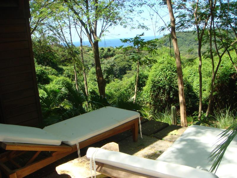 Overlooking the rainforest
