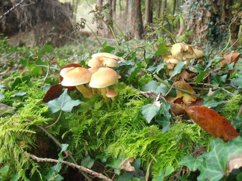 October and Mushroom picking heaven!