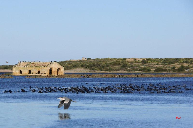 Flight of coots on the marshes of Vendicari Nature Reserve a paradise for all kinds of migrating bir