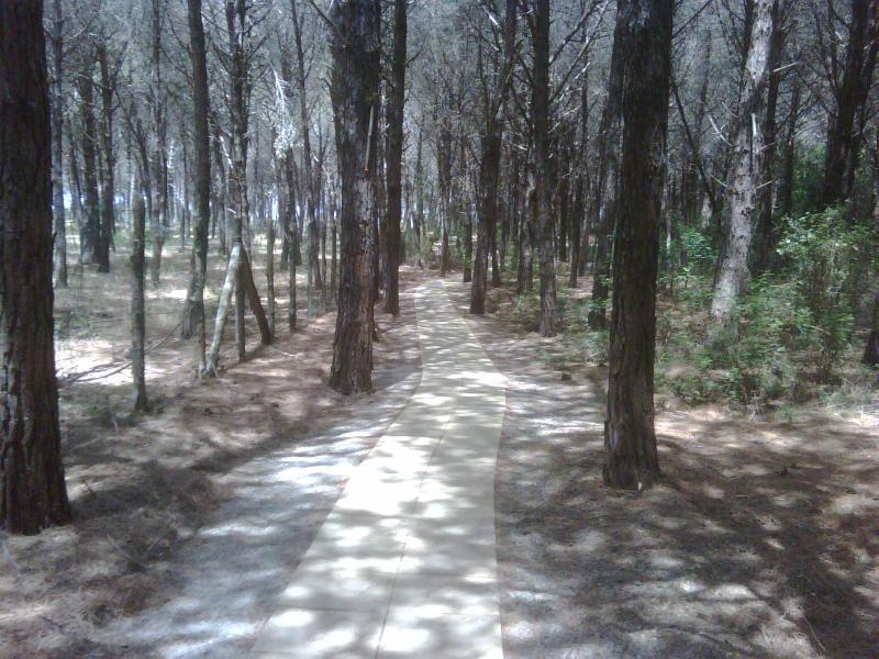 Pathway Through Forest to Beach