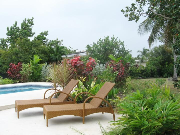 Garden and swimming pool area