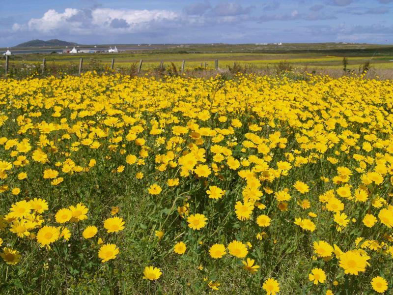 Floração da machair
