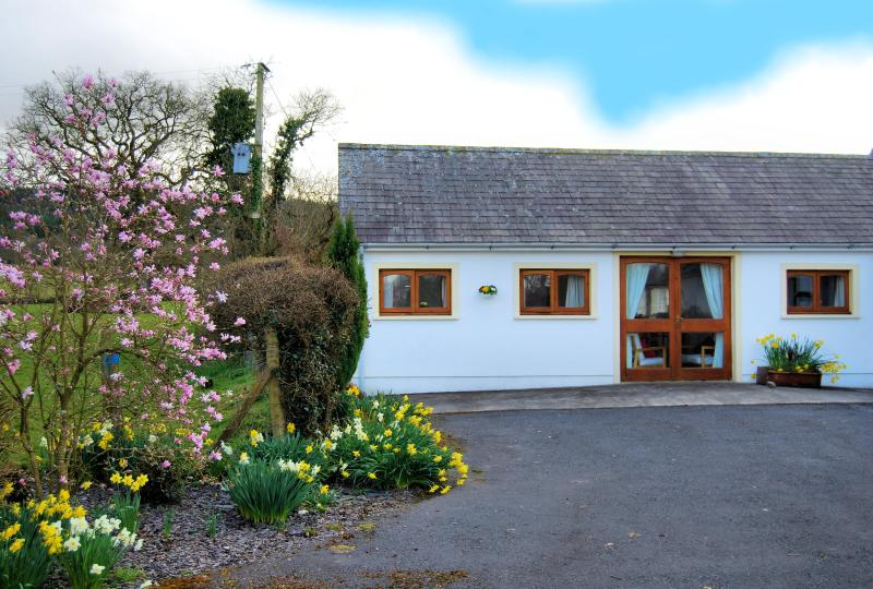 Dinefwr cottage in the spring with the magnolia itree in bloom