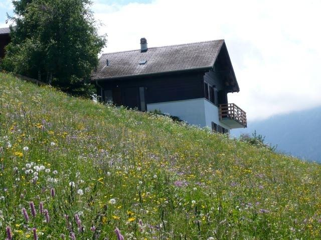 Cretta Mour in the summer with wild flowers