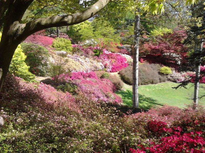 Valley Gardens in Windsor Great Park