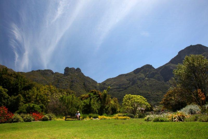 The Cape floral kingdom is the richest on the planet. Kirstenbosch Garden shows off our magnificent