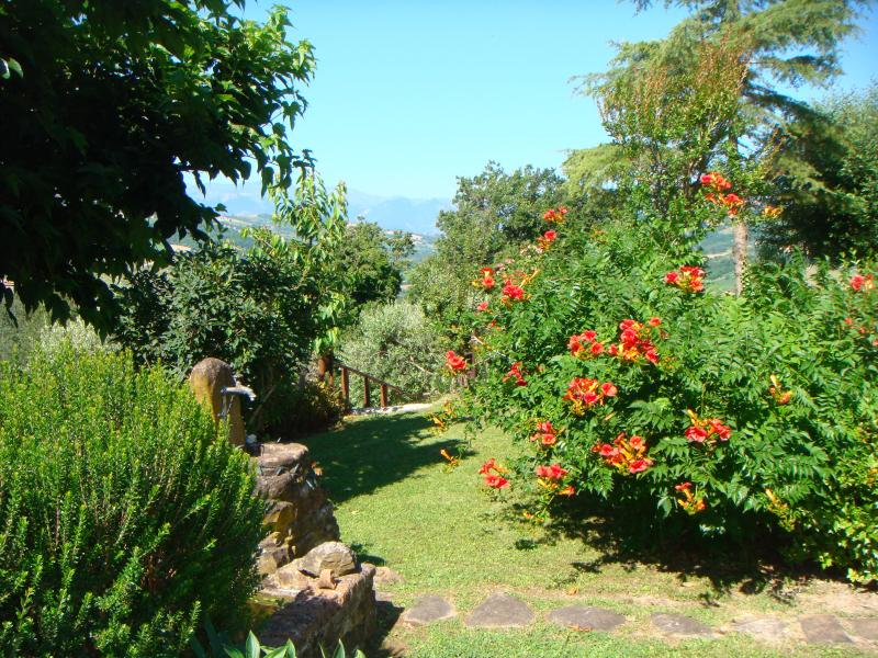 Gentle steps lead down through the olive trees to the pool