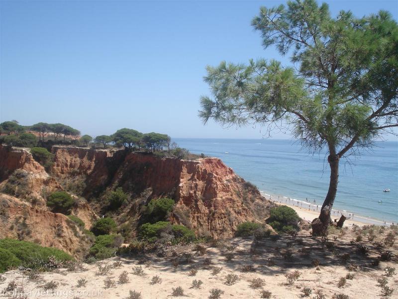Pine Cliffs