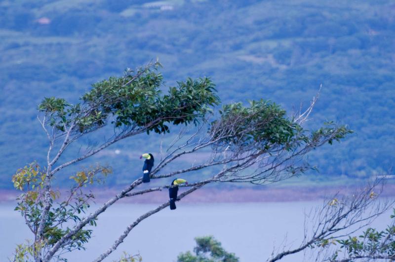 Tropische Vögel sehen von Immobilien.