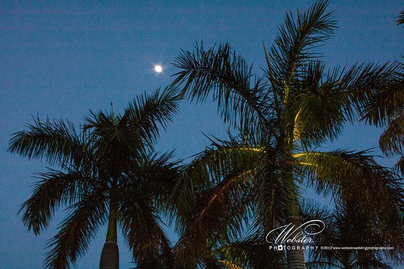 Watching the moon rise over the palm tree is the perfect end to the day.