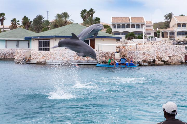 You will see these dolphins every day, but if you wish, visit the show at Seaquarium Curaçao