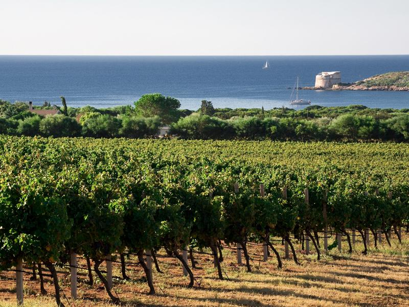 lazzaretto wineyards and beach nearby the house