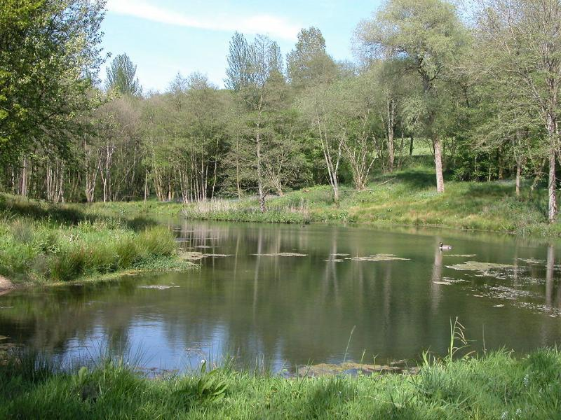 The spring fed lake in its woodland setting