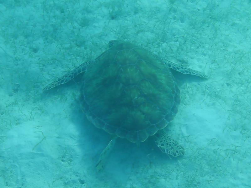 Turtle watching