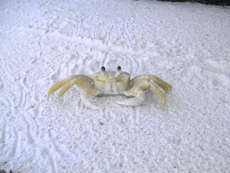 Hanging out with a crab